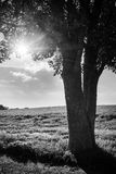 Countryside view - low sun Stock Images