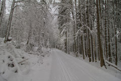 Country ski trail. In snowy forest Stock Image