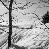 Country Snow trees. Country snow in the home park of Slovakia. Today brought the new 30cm snow stock images