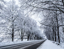 Country snow road. Royalty Free Stock Photos