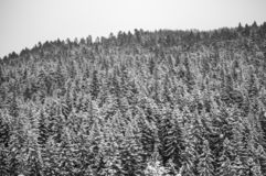 Country Snow trees. Country snow in the home park of Slovakia. Today brought the new 30cm snow royalty free stock image