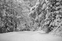 Country Snow trees. Country snow in the home park of Slovakia. Today brought the new 30cm snow stock photo