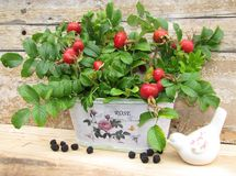 Country song in the style of Provence. Basket with autumn rose hips and blackberries royalty free stock photos