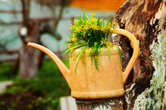 Country  stiled outdoor still life with watering can potato avoca Royalty Free Stock Photo