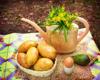 Country stiled outdoor still life with watering can potato avoca Stock Photos
