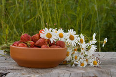 Country still life. Camomile bouquet and strawberry in a clay bowls royalty free stock images