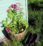 Country still life. Galoshes and a pot of flowers Royalty Free Stock Image