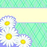 Country style background with daisies Royalty Free Stock Photos