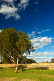 Country Summer day. Perth, Western Australia stock photo