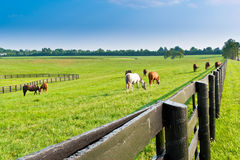 Country summer landscape. Royalty Free Stock Images