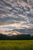 Country summer sunset Royalty Free Stock Photos