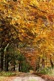 Country Track Through Autumn Woodland Royalty Free Stock Photos