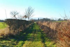 Country track in Berwickshire. Looking up country track in winter Royalty Free Stock Images