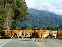 Country Traffic Jam royalty free stock photos