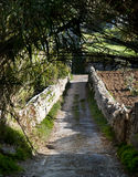 Country Trail. A dirt track in the midst of fields and overgrown trees and bamboo, Selmun, Malta Stock Images