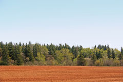 Country Treeline. Treeline with variety of different trees, some flowering, along a farmer's field stock photos