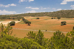 Country-Turkey. Warm fields with holm oaks Royalty Free Stock Photography