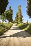 Country Tuscany road with cypresses in the afternoon Stock Photos