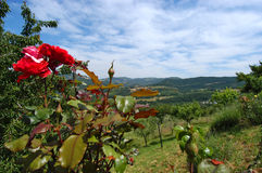 Country view. Italian landascape country view with red rose in foreground Stock Photos
