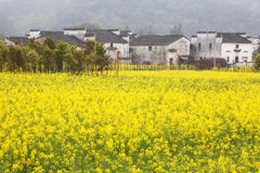 Country view in Wuyuan royalty free stock photography