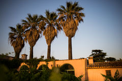 Country villa and palm trees Royalty Free Stock Image