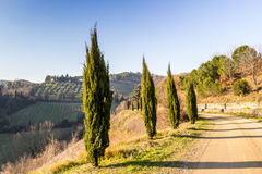 Country walk path bordered by cypresses Stock Photo