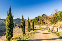 Country walk path bordered by cypresses Royalty Free Stock Photography