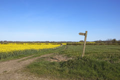 Country walking. A scenic public footpath and wooden sign amongst canola and wheat crops in the yorkshire wolds england under a blue sky Royalty Free Stock Photo