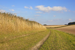 Country walking in the yorkshire wolds. A rural bridleway beside cultivated fields and dry yellow grass under a blue sky in autumn Stock Images