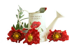 Country watering can with poppy flowers Royalty Free Stock Photography