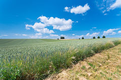 Country wheat field Royalty Free Stock Images