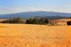 Country Wheat Field Royalty Free Stock Photos