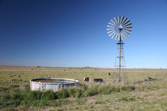 Country windmill. Wide angle shot of a grassland with cattle and windmill Royalty Free Stock Image