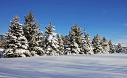 Country winter scene. On a sunny day Royalty Free Stock Image