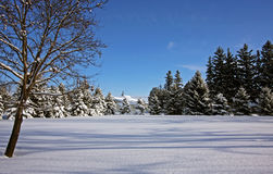 Country winter scene. On a sunny day Stock Images