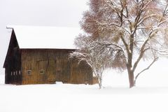 Country Winter Scene of barn and tree royalty free stock photos
