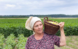 Country woman with basket with yellow bean. Senior country woman carrying knitted basket with yellow bean in the field royalty free stock photo