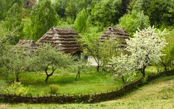 Country yard in a flowering garden Stock Photos