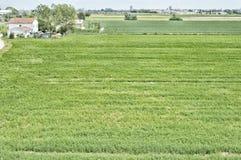 Countryhouse с зеленым полем Стоковая Фотография RF