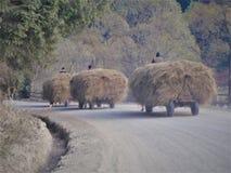 Countrylife στοκ εικόνες