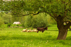 Countrylife Royaltyfri Foto