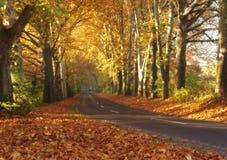 Countryroad in de herfst Royalty-vrije Stock Afbeelding