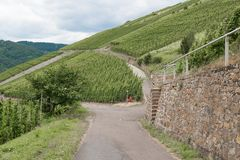 Countryroad through German vineyards along river Mosselle Stock Image