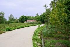 Countryroad im fruchtbaren Ackerland am sonnigen Sommertag Lizenzfreies Stockfoto