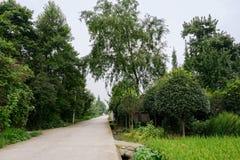 Countryroad im fruchtbaren sonnigen Sommer Lizenzfreies Stockfoto