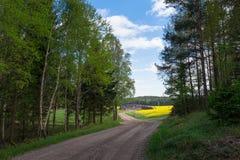 Countryroad mit gelben rapefields Lizenzfreie Stockbilder
