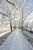 Countryroad nell'orario invernale fotografie stock libere da diritti