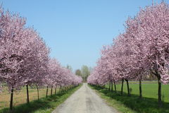 Countryroad in spring Royalty Free Stock Photos