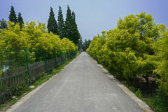 Countryroad in sunny summer Royalty Free Stock Photo