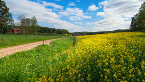 Countryroad with yellow rapefields and red farmhouses royalty free stock photography